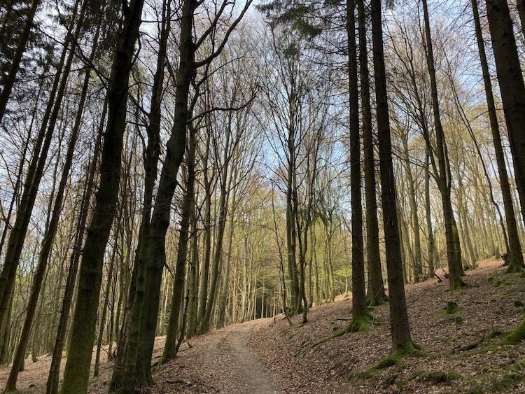 Das Wandern durch den Wald (Waldbaden) beruhigt die Nerven.