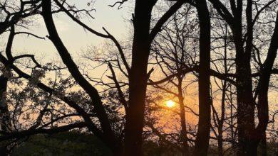 Photo of Unser Wald – Schon mal im Wald gebadet?