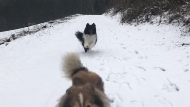 Photo of Wandern im Schnee